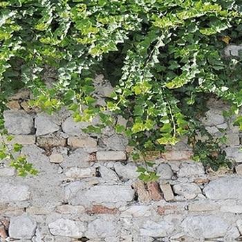 Стеновая панель из МДФ с фотопечатью, MRA-5